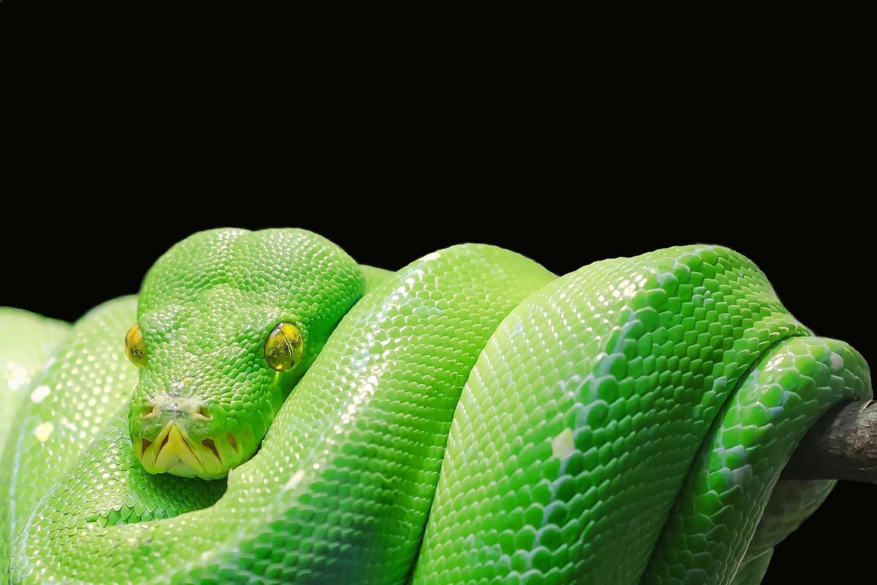 Beautiful Snakes