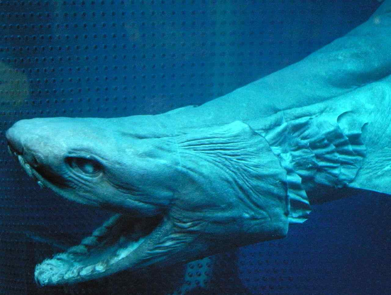 Top 15 Most Terrifying Deep Sea Creatures