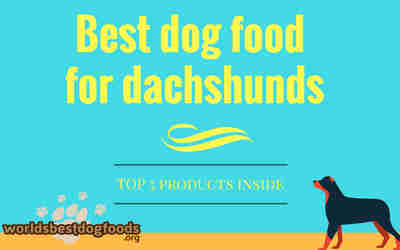What to feed dachshunds