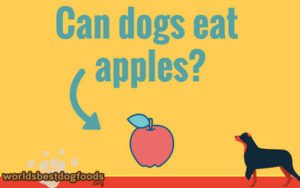 IS apple good food for your dog?