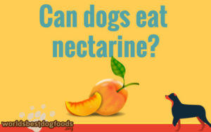 should you feed a nectarine to your dog?