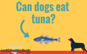 can your dog have tuna as food?
