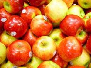 apples, is it good dog food?