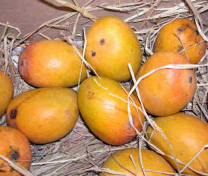mangoes for your friend