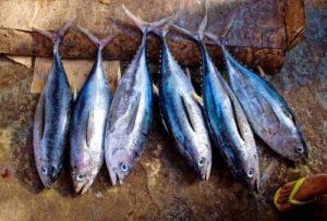 tuna dog food