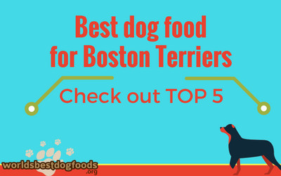 What is best to feed your boston terrier
