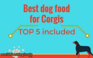 What to feed your corgi?