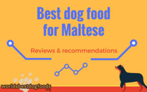 Best dog food for Maltese