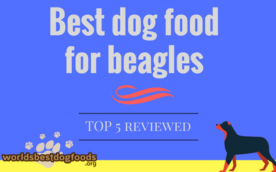 What is best to feed your beagle?