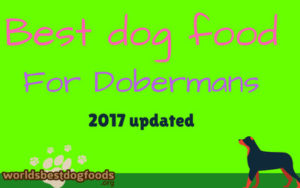 How to feed your doberman?