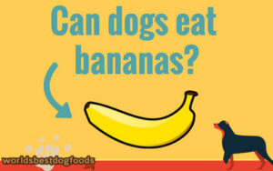 Can you feed your dog bananas or not?