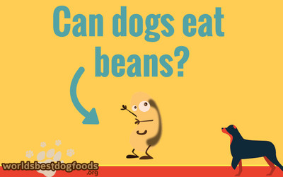 can you feed beans to your dog?