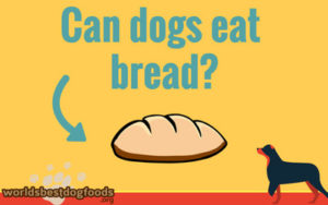 can you feed bread to a dog?