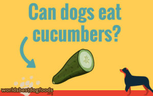 Why you should feed your dog cucumbers