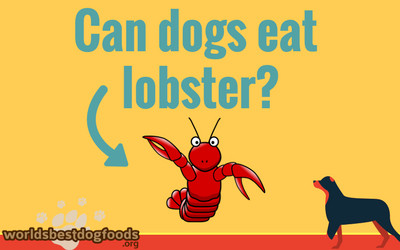 should you feed lobster to your dog?