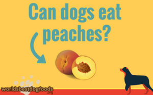 Can you feed peaches to your dog?