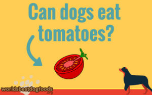 Can or cannot have your dog tomatoes?