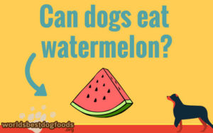 can you feed your dog watermelon