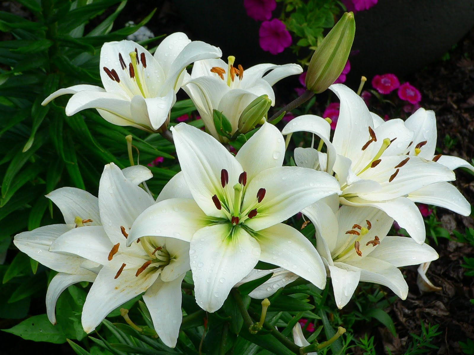 Night Blooming Flowers