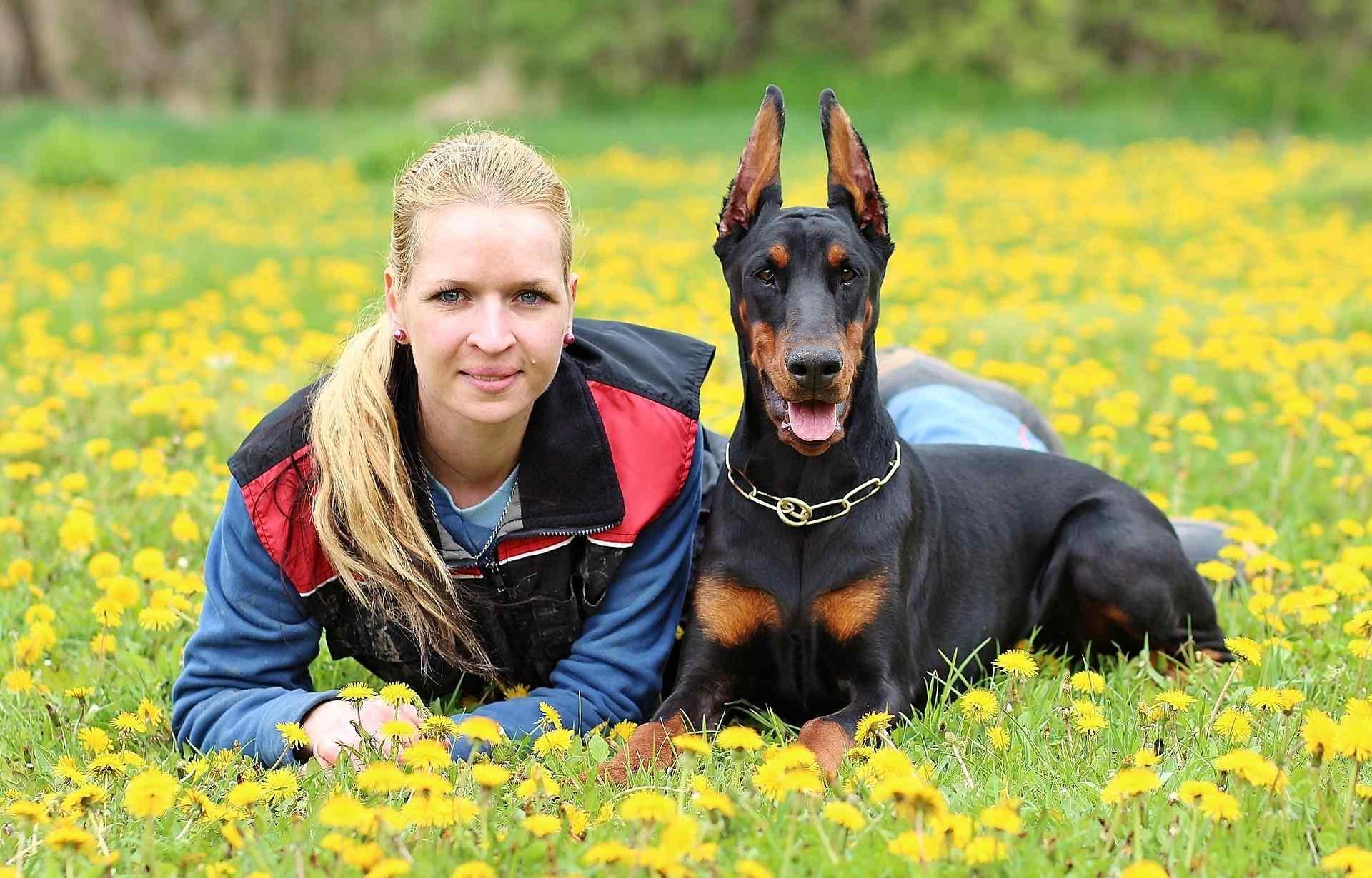 best guard dogs