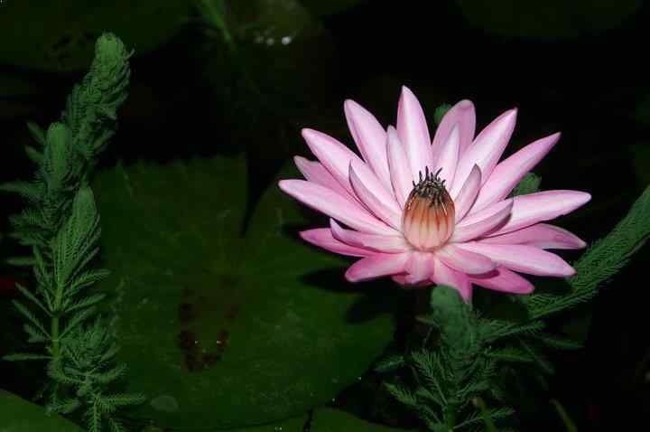 Top 10 most beautiful night blooming flowers - Flowers that bloom only at night ...