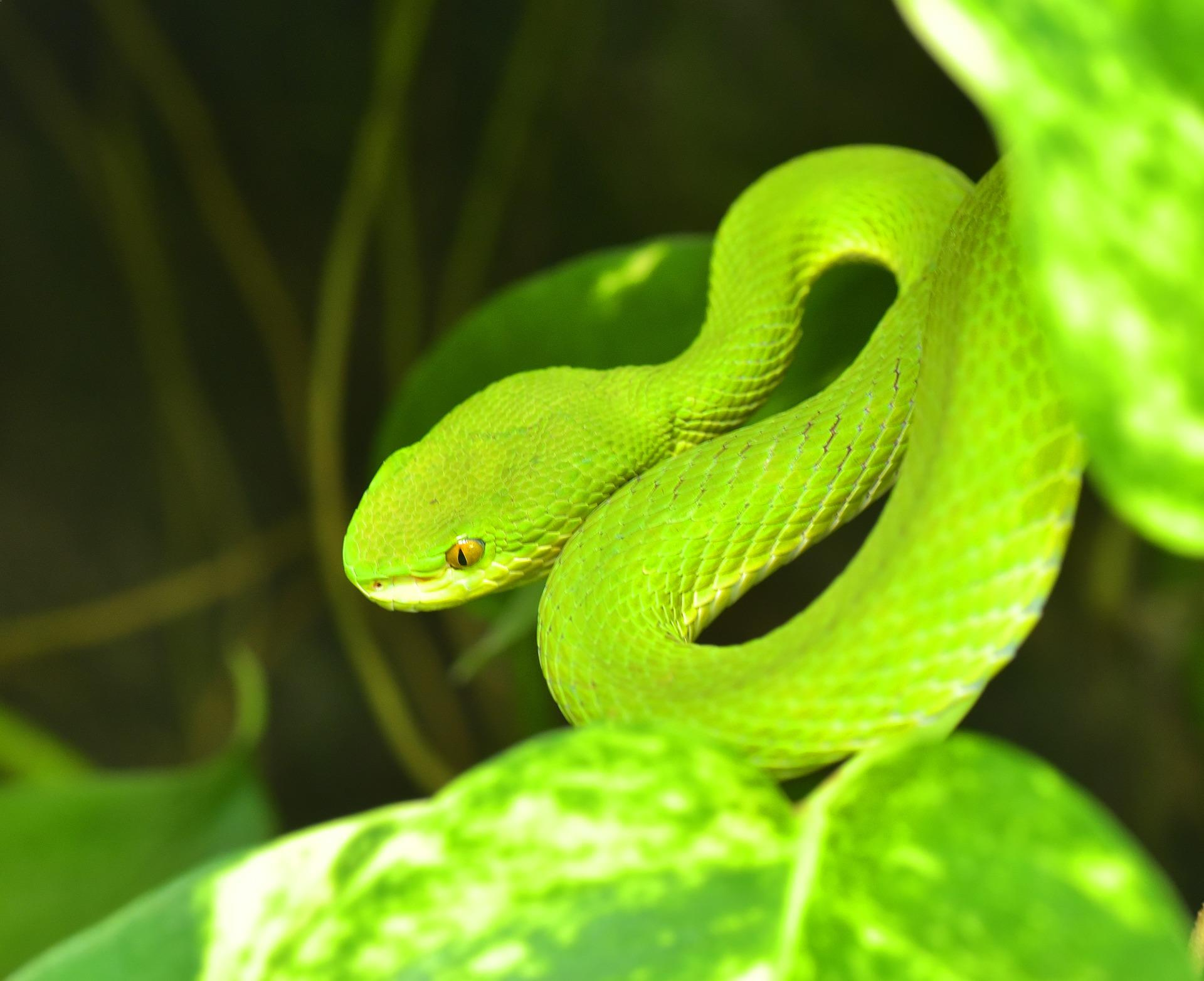 top 10 non venomous snakes in the world