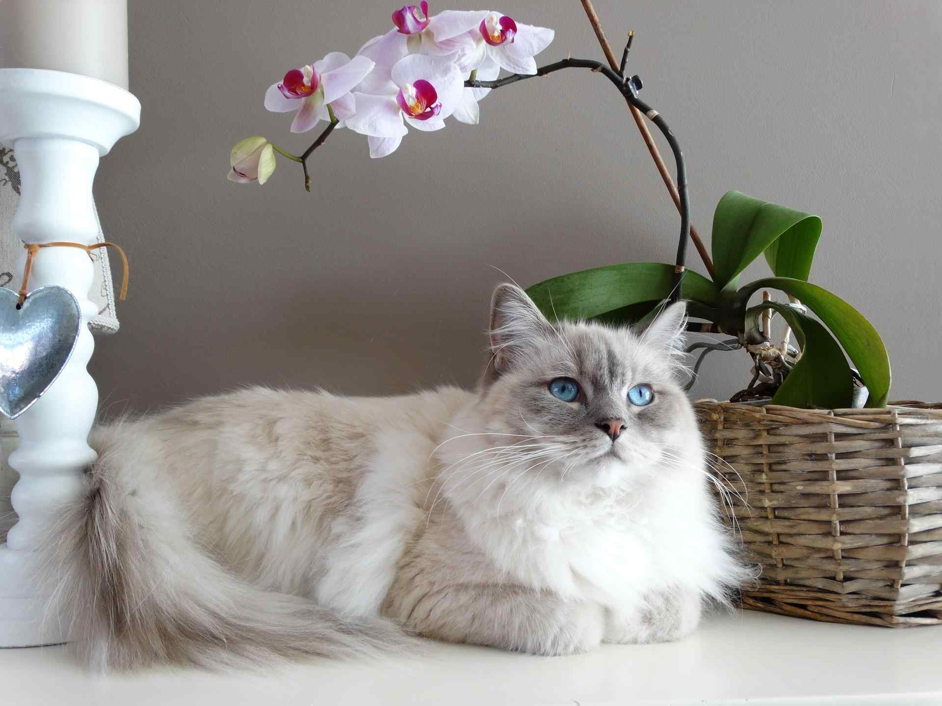 Top Most Beautiful Cat Breeds In The World