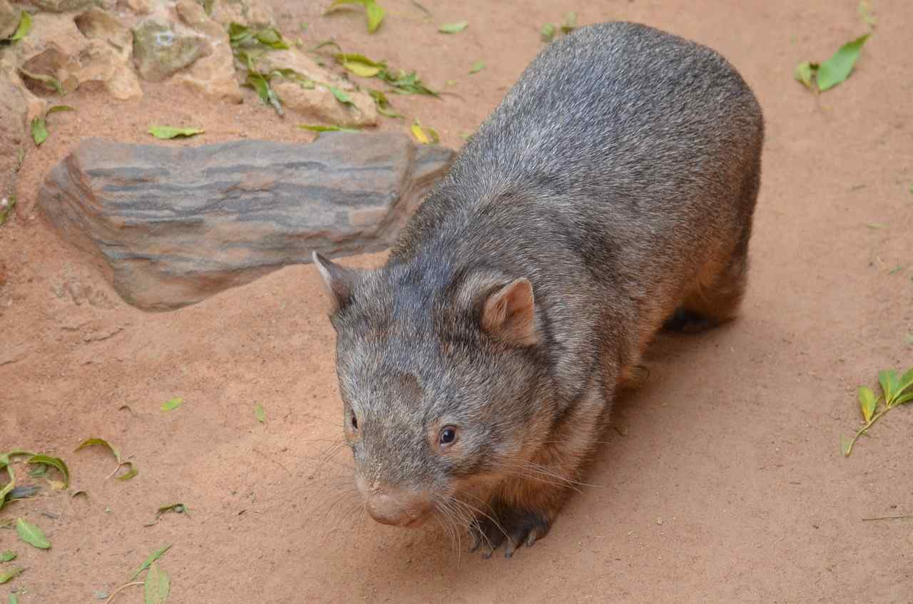 Feet In Meter Top 9 Wonderful Australian Animals