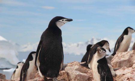 Antarctic Animals