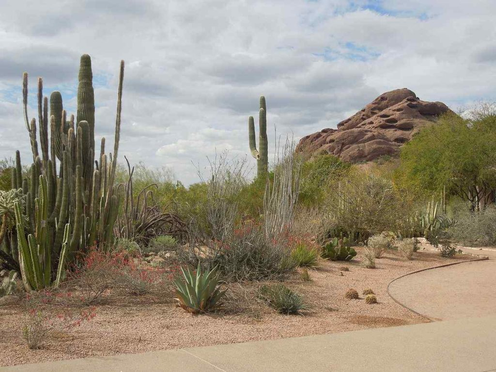 Desert Botanical Garden, Phoenix, Arizona, United States