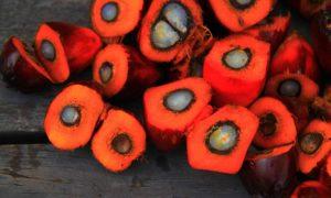 Palm Fruits