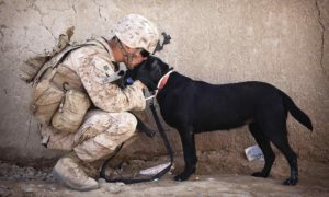 Soldier rescue dogs