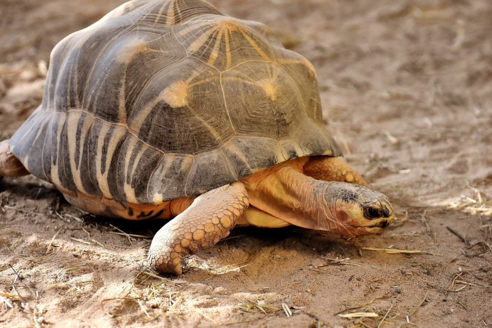 slowest animals in the world
