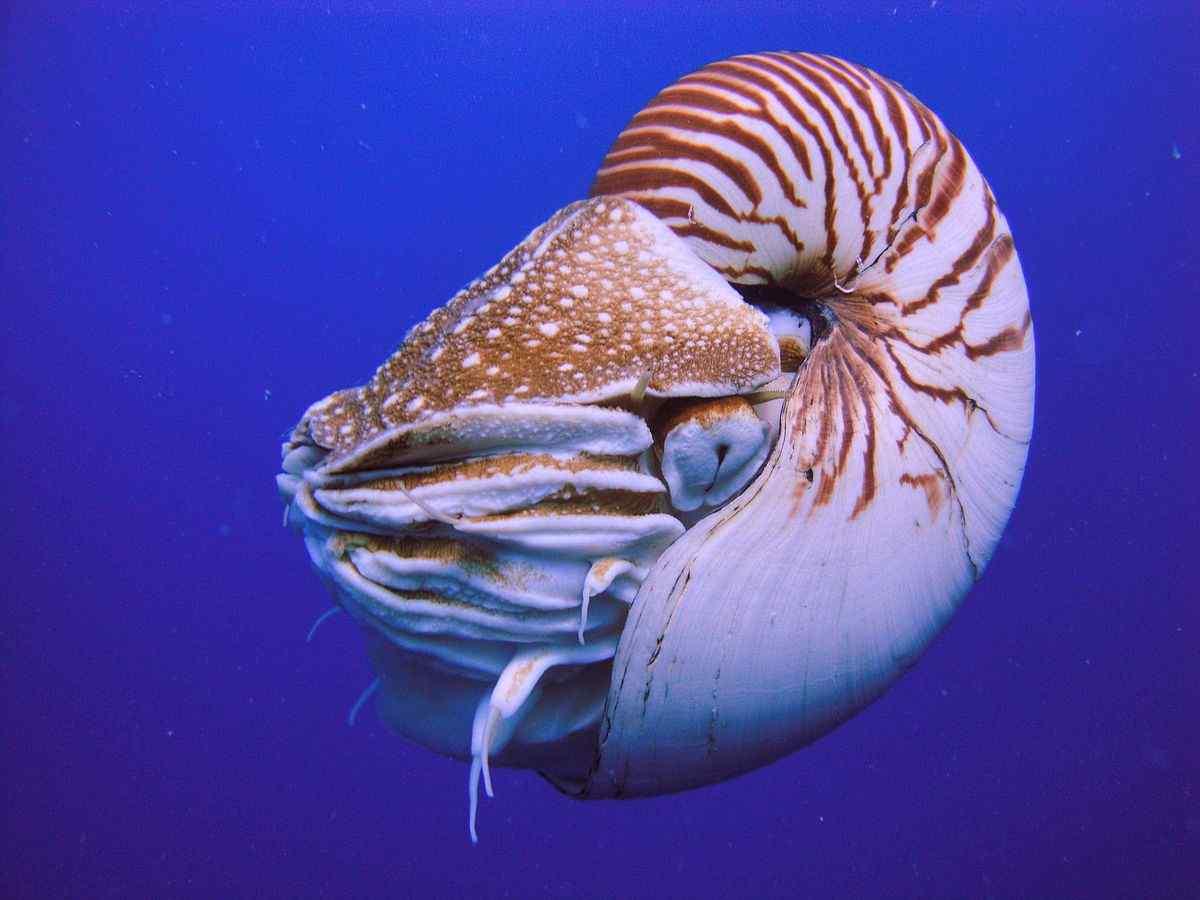 Oldest Animal Species