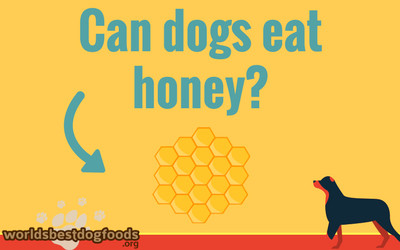 Can dogs eat honey