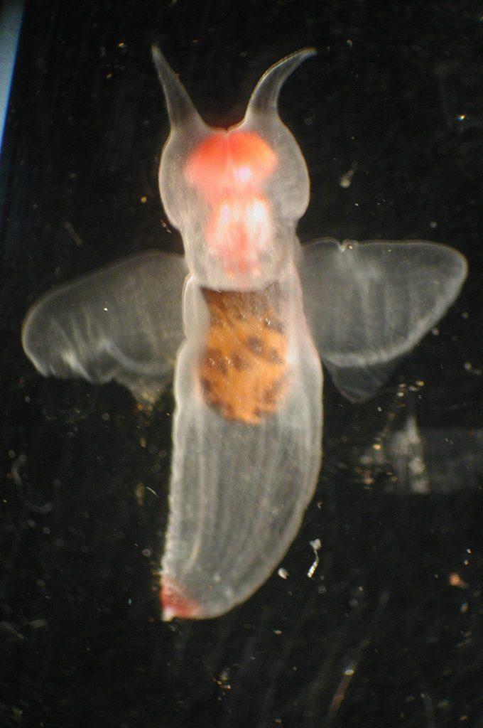 transparent animals