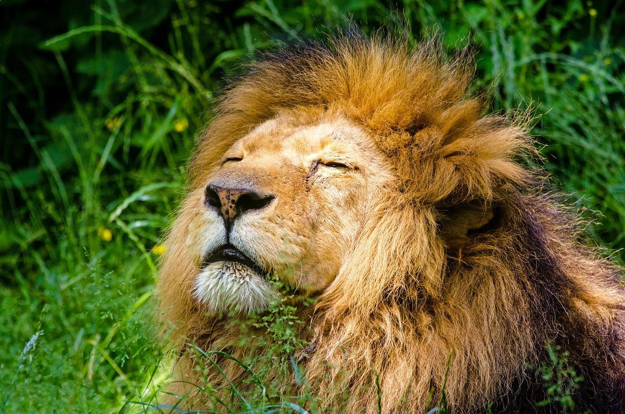 top 10 fierce animals in the world