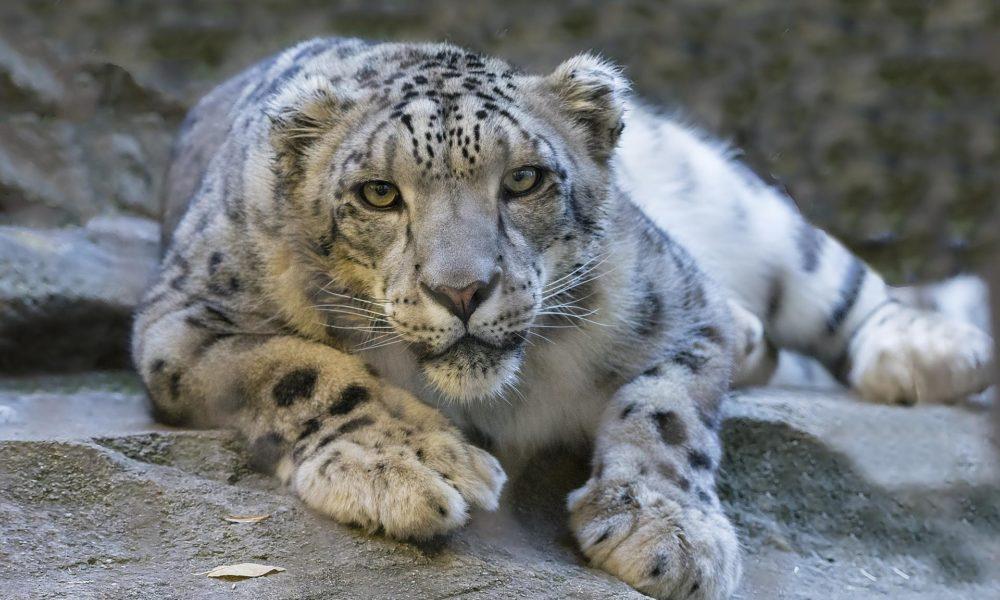 Toughest Animals
