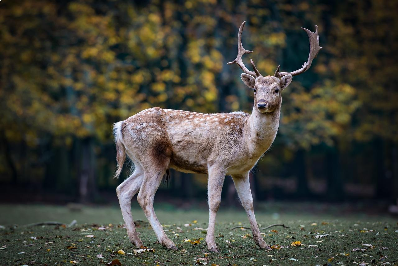 Best Land Animals