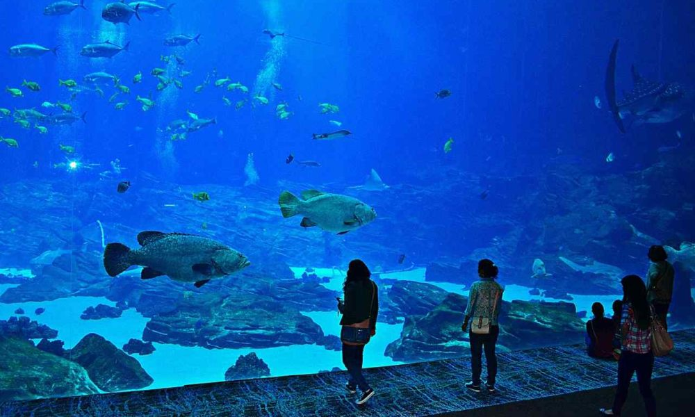 15 Best and Largest Aquariums in the World 2018
