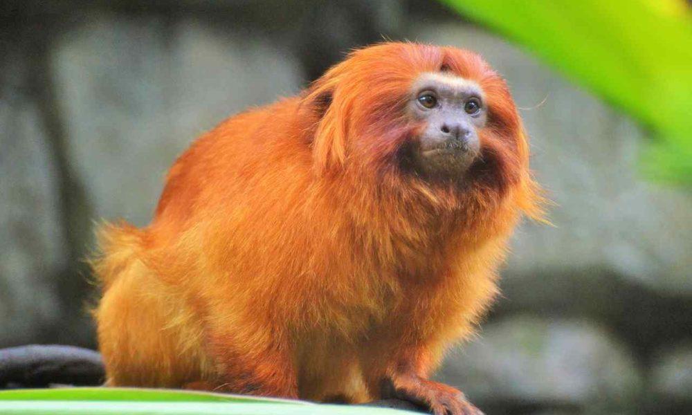 15 Types Of Monkeys