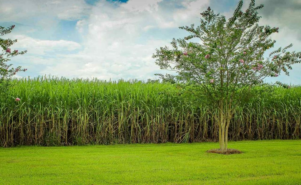 Top 10 Sugar Producing Countries In The