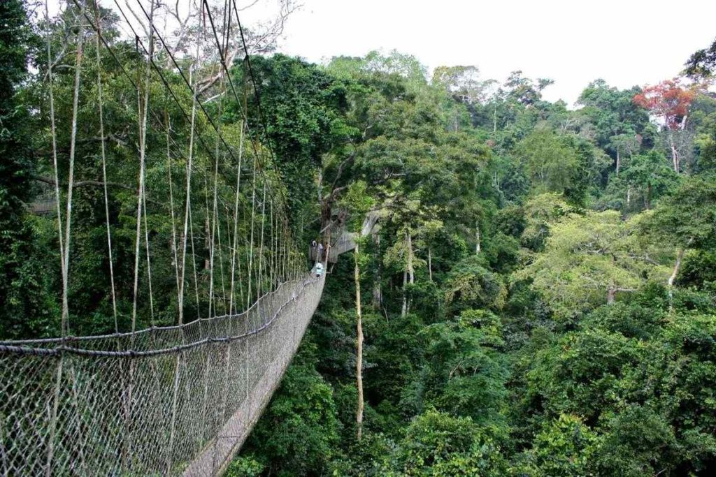 Kakum National Park Canopy Walkway, Ghana