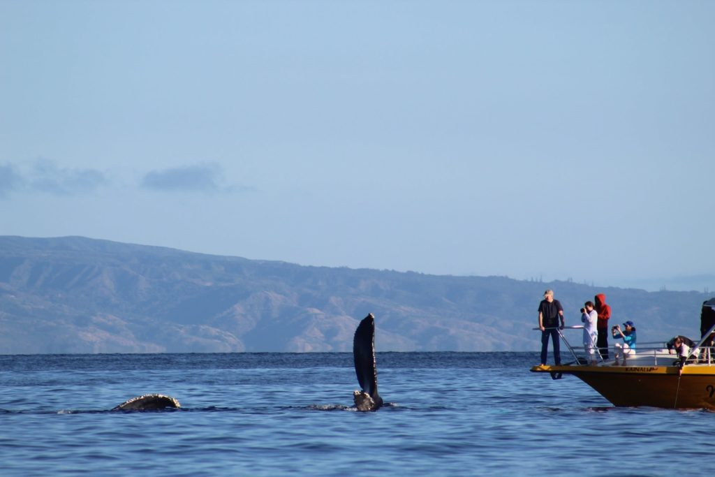 Los Cabos Whale Watching location