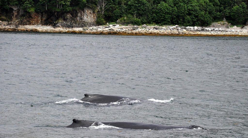 Maui Whale Watching Location