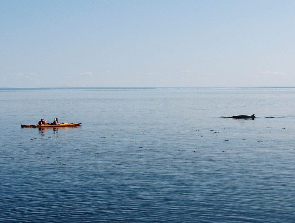 Reykjavik Iceland Whale watching location