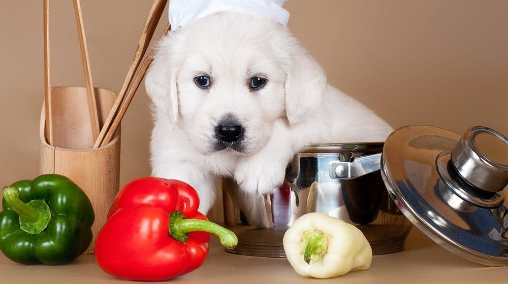 Feeding Your Dog With Peppers - 2020